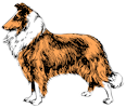 collie-sable-icon